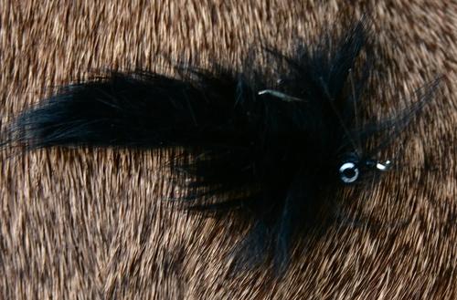 The bunny leech or bunny booger, a deadly fly.