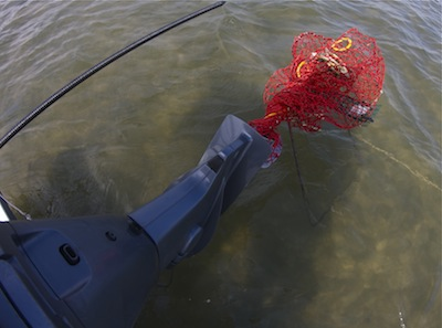 crab trap wrapped around an outboard's lower unit.