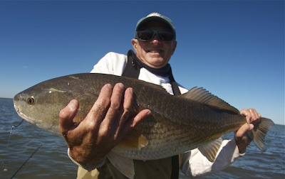 Big redfish, banana river lagoon, florida