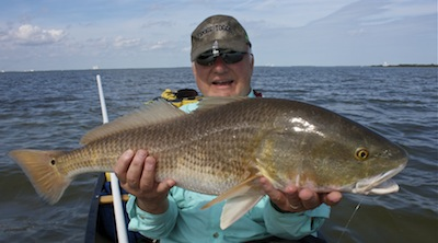 Big redfish from the banana river lagoon, florida