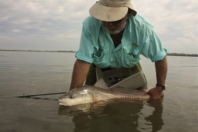 big redfish from banana river lagoon, florida.