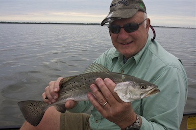 spotted seatrout, banana river lagoon, florida