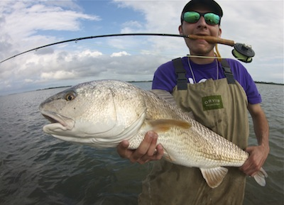 bull redfish on fly