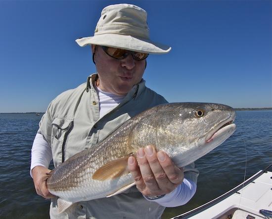 mosquito lagoon redfish, mosquito lagoon, florida