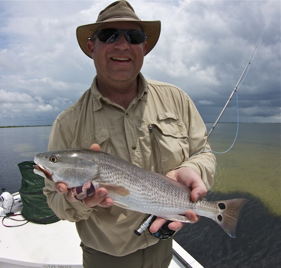redfish, indian river lagoon
