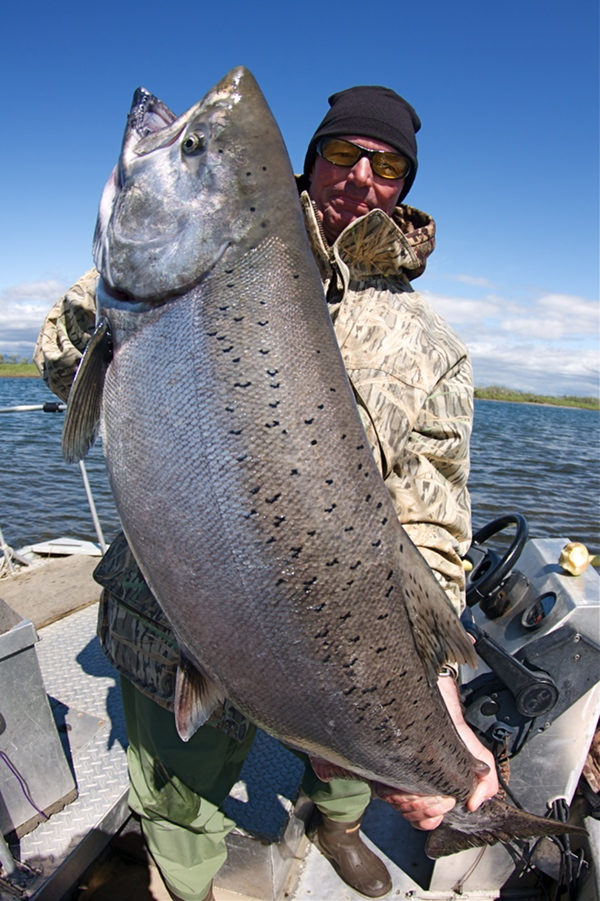 Monster King Salmon, Goodnews River Alaska