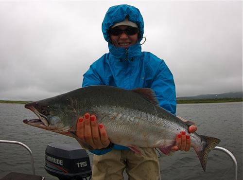 pink salmon Hannah