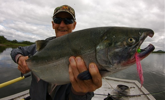 silver salmon goodnews river