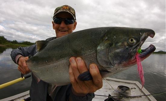 silver salmon goodnews river
