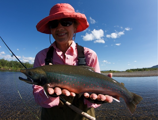 Dolly varden, Goodnews River Alaska