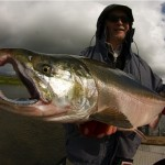 silver salmon, goodnews river alaska