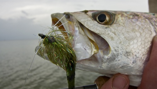 Indian River Seatrout