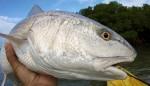 Florida Keys Fishing Report, Mosquito Lagoon Fishing Report