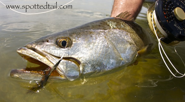 mosquito lagoon fishing report