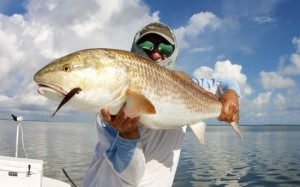 Mosquito Lagoon redfish fishing report