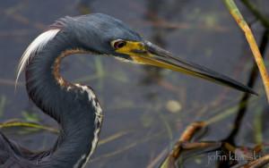 flamingo fishing report