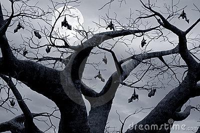 florida bats