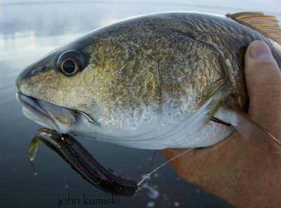 orlando area saltwater fishing report