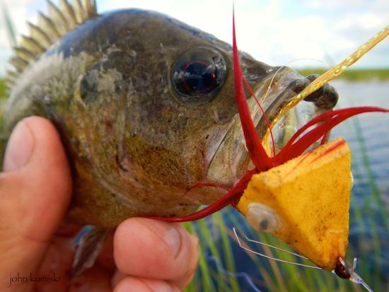 orlando area freshwater report