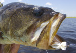 St. Johns River and Mosquito Lagoon Fishing Report
