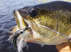 St. Johns River fishing report