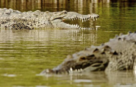 crocs too
