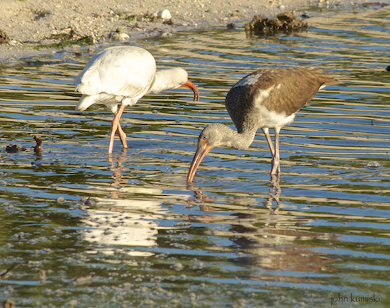 Flamingo Everglades Kayak Fishing Report