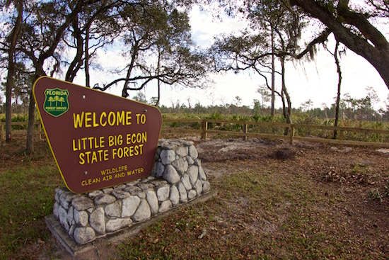 Welcome to the State Forest