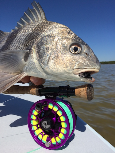 Fort Myers Fishing Report
