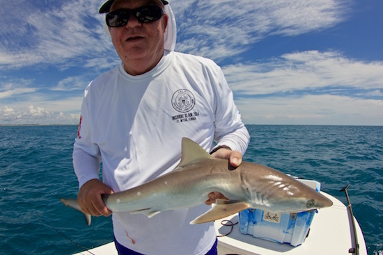 Finger shark the spotted tail for Port canaveral fishing report
