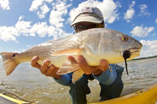 Kayak Fly Fishing Mosquito Lagoon redfish