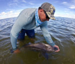 Elusive Black Drum Fishing Report