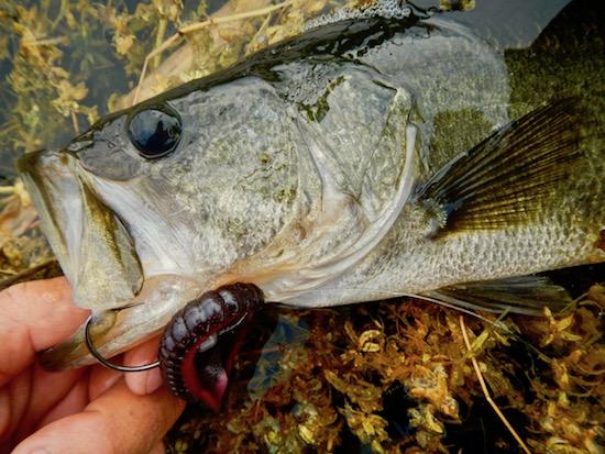 mosquito lagoon fishing repot