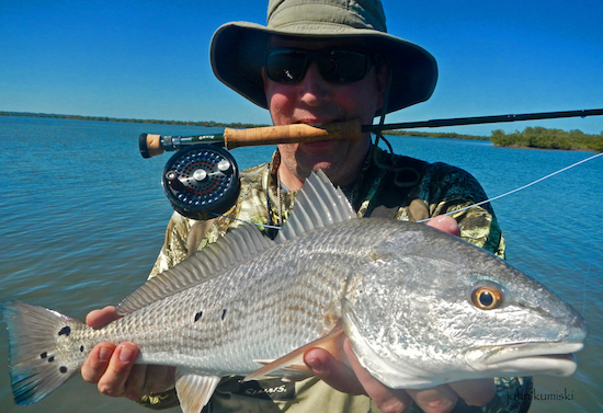 Lauric fly redfish the spotted tail for Mosquito lagoon fishing report