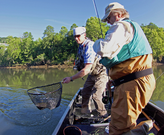Anderson county tennessee fishing report the spotted tail for Tennessee fishing report