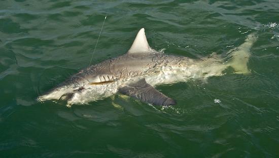 orlando no fishing report