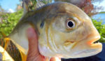 Explorations Fishing Report