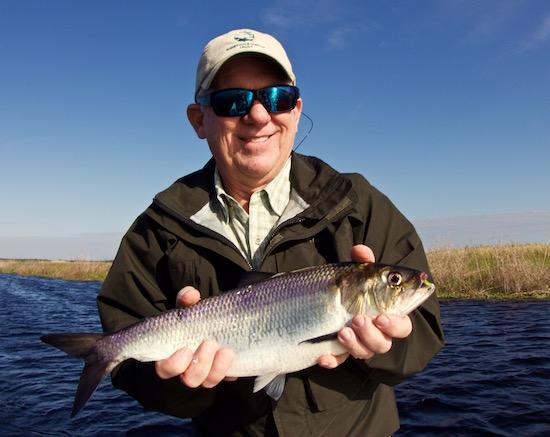Img 3700 capt john kumiski 39 s spotted tail website for John s pass fishing charters