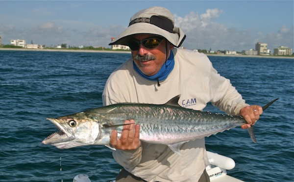 Slow trolling for king mackerel the spotted tail for King mackerel fish