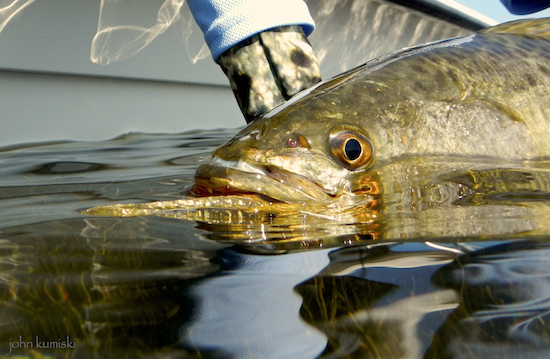 mosquito lagoon seatrout