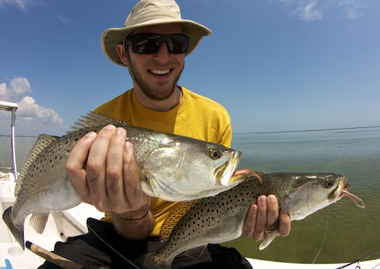 Summer Seatrout in Mosquito Lagoon