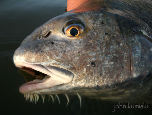 for better fishing photography.