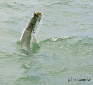 free florida fishing information