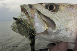 successful seatrout flies