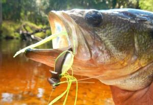 fly fishing bass orlando