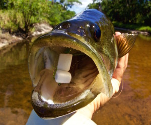fly fishing bass orlando