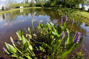 fly fishing florida retention ponds